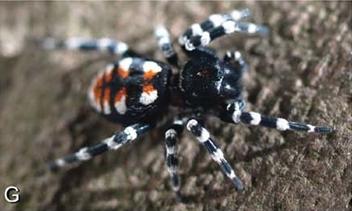 Loureedia il ragno che prende il nome da Lou Reed